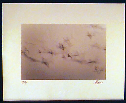 Untitled - Birds  Flying,EDT.# 9 / 24