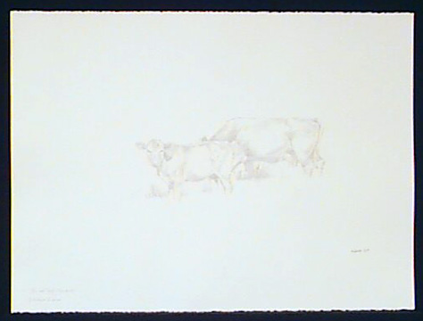 Cow and Calf (in a field)