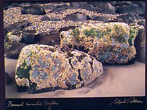Barnacle Encrusted Boulders   Radiant Earth Vol 1 3/20