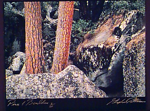 Pines & Boulders   Radiant Earth Vol 1 3/20
