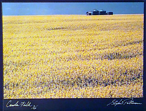 Canola Field  Radiant Earth Vol 11 3/20  Framed, included in price