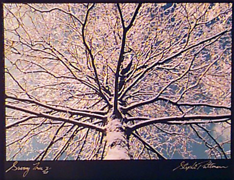Snowy Tree  Radiant Earth Vol 11 3/20