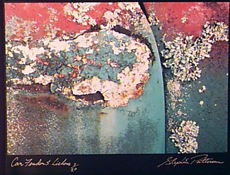 Car Fender & Lichens  Radiant Earth Vol 11  3/20