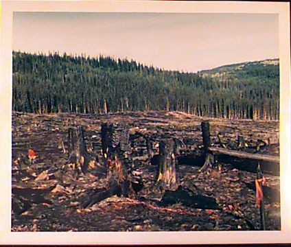 John in a Slash Burn, Princeton,BC