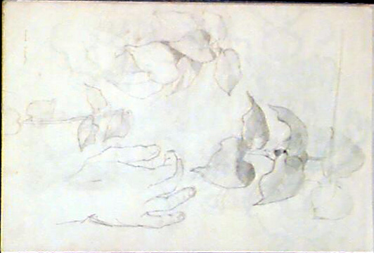 Studies(Hand & Leaves )