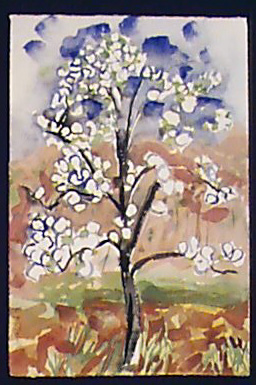 Bloom Pear Tree